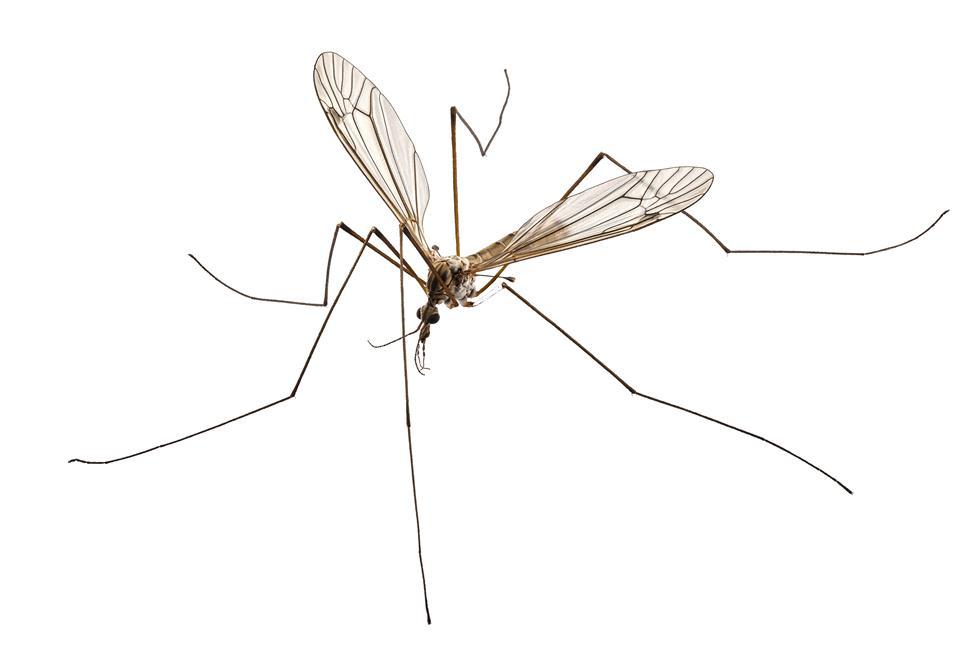 קטלני יתושים/זבובים  לסוגיהם